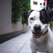 Black and white dog in the street.